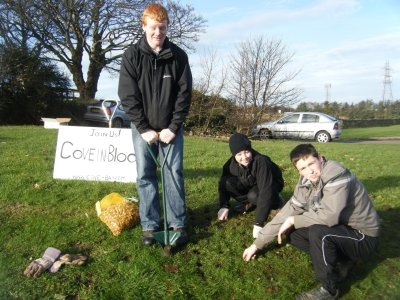 Bulb planting in Cove